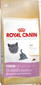 rcf_kitten-brit
