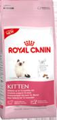 rcf_kitten